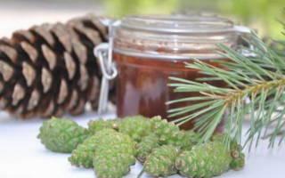 Варенье из сосновых иголок — рецепт, приготовление ингредиентов, видео