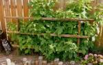 Новые плодовые кустарники для сада, виды и сорта, видео