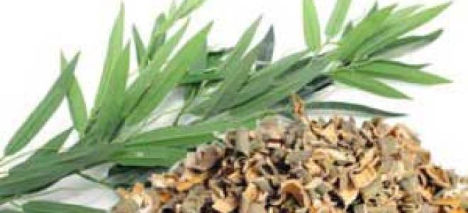 Кора ивы — лечебные свойства и противопоказания к применению, видео