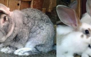 Можно ли давать кроликам — читайте подробную статью