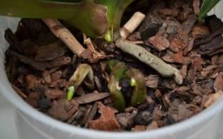Какой грунт нужен для орхидеи, особенности выбора, видео