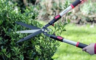 Как выбрать садовые ножницы для стрижки газона, кустов, видео