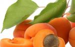 Как вырастить абрикос из косточки, посадка и уход, когда будет плодоносить дерево, видео