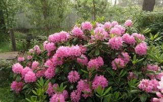 Цветущие кустарники — осенние, с белыми, голубыми цветами, видео