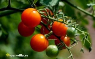 Выращиваем томаты черри на даче, видео