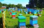 Пчеловодство — организация пасеки для получения прибыли и развития бизнеса, видео