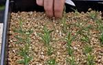 Как применять вермикулит для растений, химический состав, видео