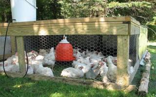 Болезни цыплят — симптомы и лечение препаратами поливитаминоацидос, метронидазол, тривит и витамины, каннибализм у цыплят, видео