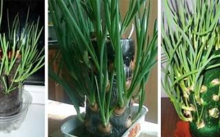 Как сделать огород в бутылке на подоконнике, видео