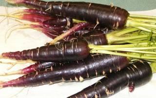 Черная морковь, что это такое, как выглядит, особенности, видео