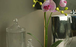 Какие горшки для орхидей нужны, как правильно выбрать емкость и посадить растение, фото орхидей в горшках, видео