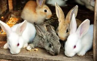 Какие бывают кролики, виды, популярные породы, видео