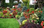 Английский цветник — этапы проектирования, выбор растений, видео