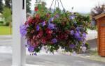 Ампельные цветы для кашпо — фото и названия, как сажать, видео