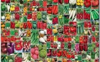 Лучшие сортовые семена — список агрофирм России производителей семян, видео