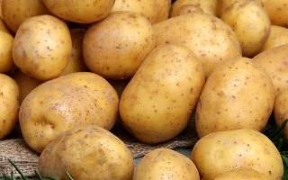 Картофель Удача — описание сорта, правила ухода, фото, видео