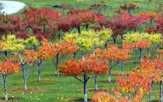 Ноябрь — работы в саду, обрезка, подкормка и подготовка к зиме деревьев, видео