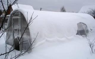 Январь — сезонные работы в теплице и на грядках, проверка семян на всхожесть, видео