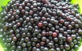 Компот из черемухи на зиму — рецепты компотов из красной и черной черемухи с добавлением яблок, видео