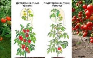 Томат Дубрава Дубок — характеристика и описание сорта, выращивание, видео