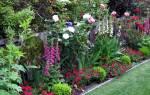 Как сочетать растения в саду, примеры посадки цветов