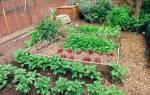 Поздние сроки посадки картофеля на дачном участке + видео