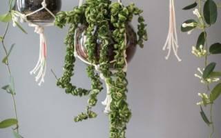 Макраме кашпо для цветов — схемы плетения для начинающих, видео