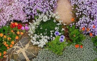 Почвопокровные растения – вашей дачи возрождение, видео