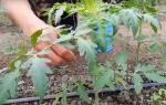 Томаты и огурцы в теплице — способы подвязки растений, видео