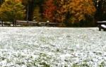 Как подготовить газонную траву к зиме + видео