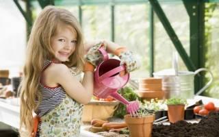 Как ухаживать за комнатной хризантемой дома — видео