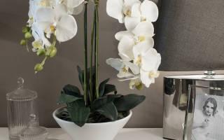 Орхидея — уход в домашних условиях за цветущими растениями, фото