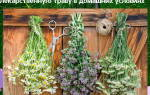 Как сушить лекарственную траву в домашних условиях, как хранить