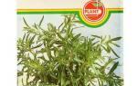 Чабер — посев семян на рассаду, подготовка посуды и почвы, видео