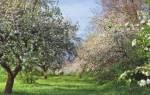 Плодовые деревья — совместимость посадок, симбиоз различных видов, видео