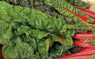 Свекольная ботва — заготовка на зиму, маринованные листья и ботва + видео