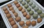 Закладка яиц в инкубатор в домашних условиях, какие яйца можно закладывать, как проверить, поворот своими руками, видео
