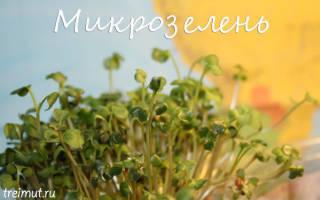 Как вырастить микрозелень дома, способы посадки