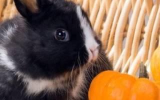 Как выкормить крольчат без крольчихи с первых дней жизни, чем кормить в 20 дней, 1 месяц, видео