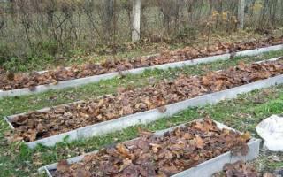 Ноябрь на цветочных клумбах х подготовка многолетников к зимовке, внесение удобрений, видео