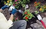 Применение удобрений для садовых цветов весной и летом, видео