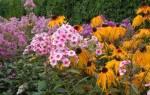Какие многолетники цветут все лето, обзор цветов, видео