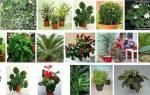 Тенелюбивые комнатные растения — правила подбора для выращивания дома, видео