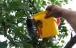 Плодовые деревья — три способа размножения, сроки, видео