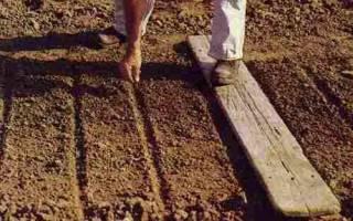 Особенности выращивания моркови, видео