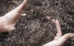 Как обеззаразить землю для рассады, видео-инструкция