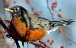 Птицы в саду, как привлечь на участок пернатого помощника, видео