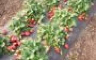 Сад и огород — все полезные и актуальные статьи