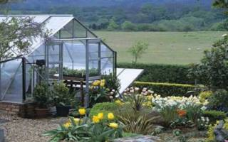 Элеутерококк колючий — фото растения, способы выращивания, лечебные свойства, видео